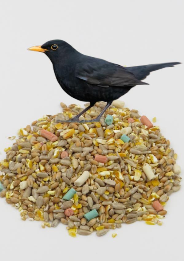 Husk Free Songbied wild bird food designed for feeding songbirds