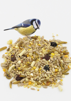 Mighty Feast Mix wild bird food with blue tit