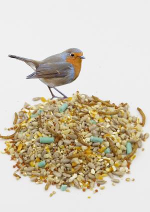 Royal Robin wild bird food for robins