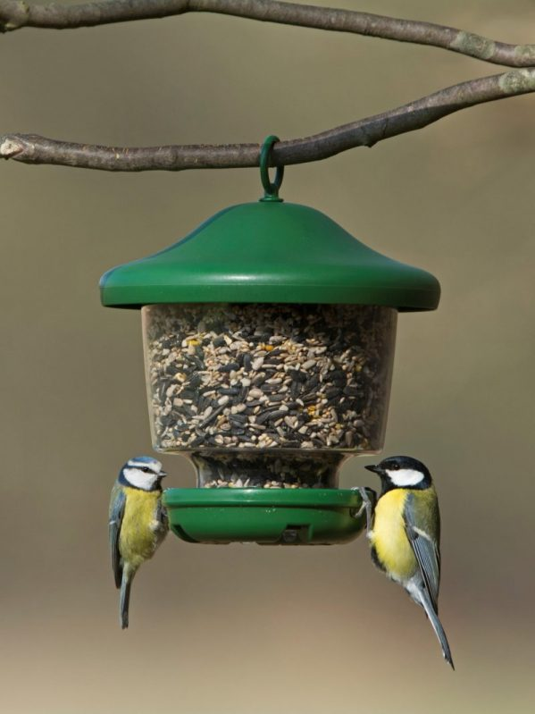 My Favourites Feeder. Large capacity durable polymer feeder filled with mixed seed with 2 Great Tits clinging on to feed. Large birds cannot feed from this feeder.