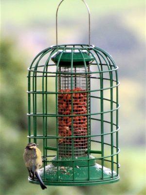 Red Barn squirrel guardian peanut feeder for feeding wild birds. with blue tit