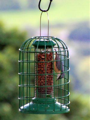 Red Barn squirrel guardian peanut feeder for feeding wild birds with nuthatch