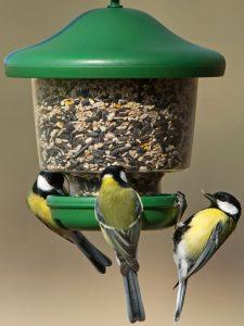 My Favourites. Wild bird feeder for little clinging birds.