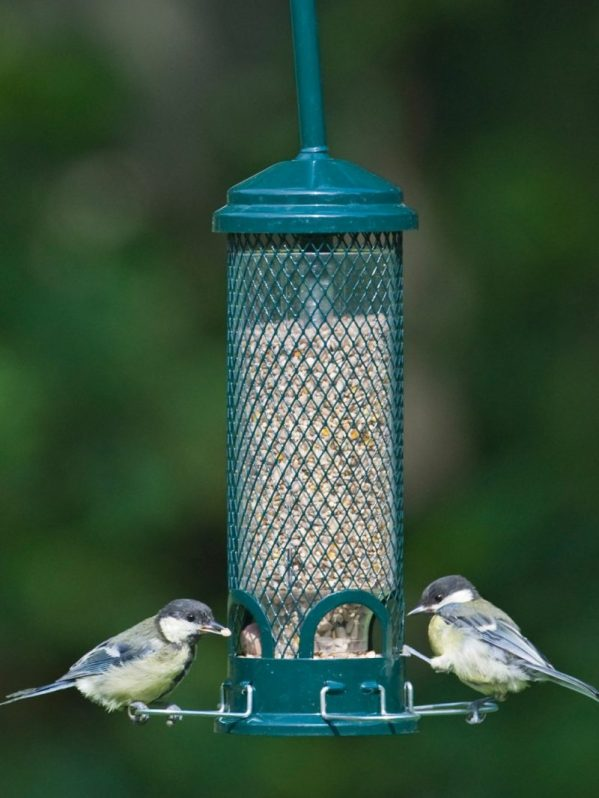 Squirrel Buster Mini squirrel proof wild bird feeder. Birds perch and feed, choice of 4 ports.