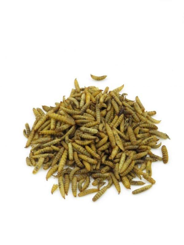 Calciworms high in protein and calcium for wild bird feeding