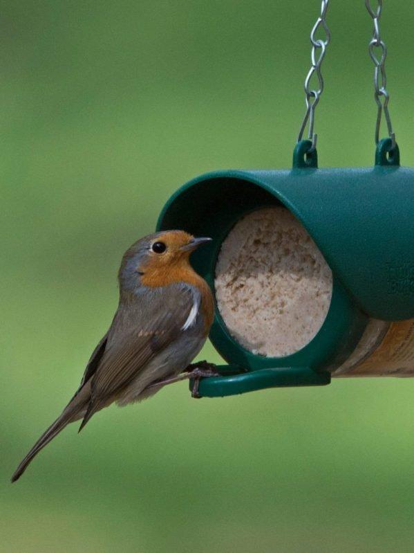 Robin sitting on Flutter Butter Feedr perch. For feeding salt free peanut butter to wild birds.