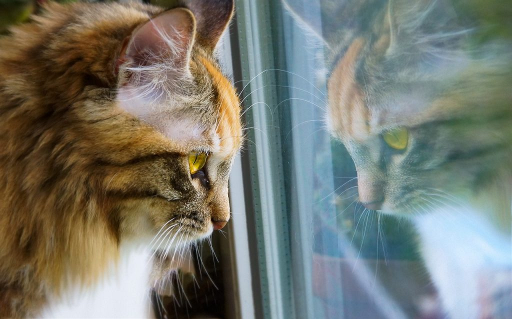cat gazing out of a window