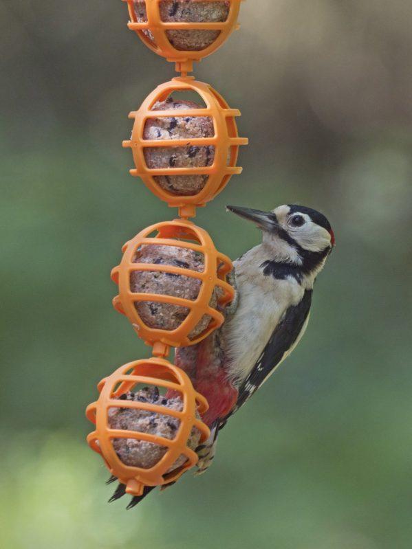 cahin of fat ball bunting with woodpecker feeding