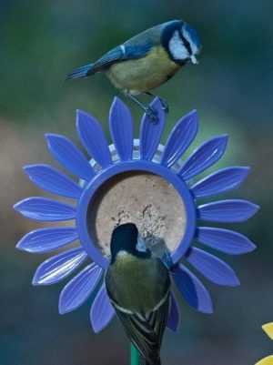 Lilac Flutter Butter pod flowerbed feeder with blue tits feeding