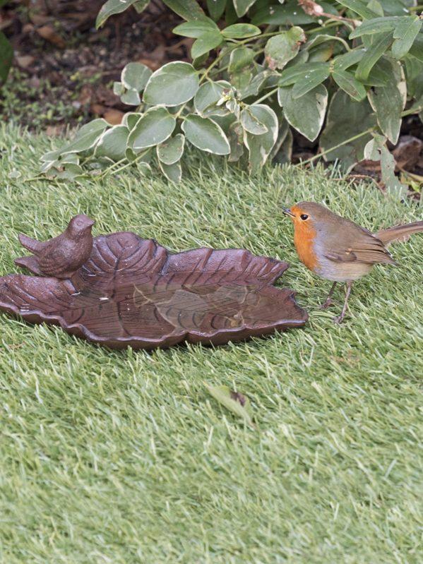 Robin visiting old iron bird bath on lawn