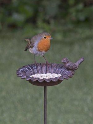 old iron flower feeder for bird food in garden with robin