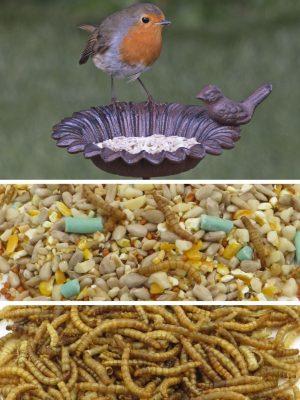 Robin bird feeding bundle. old iron feeder royal robin blend plus dried mealworms.