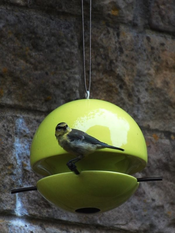 Green and Blue Bird ball seed feeder with baby blue tit feeding