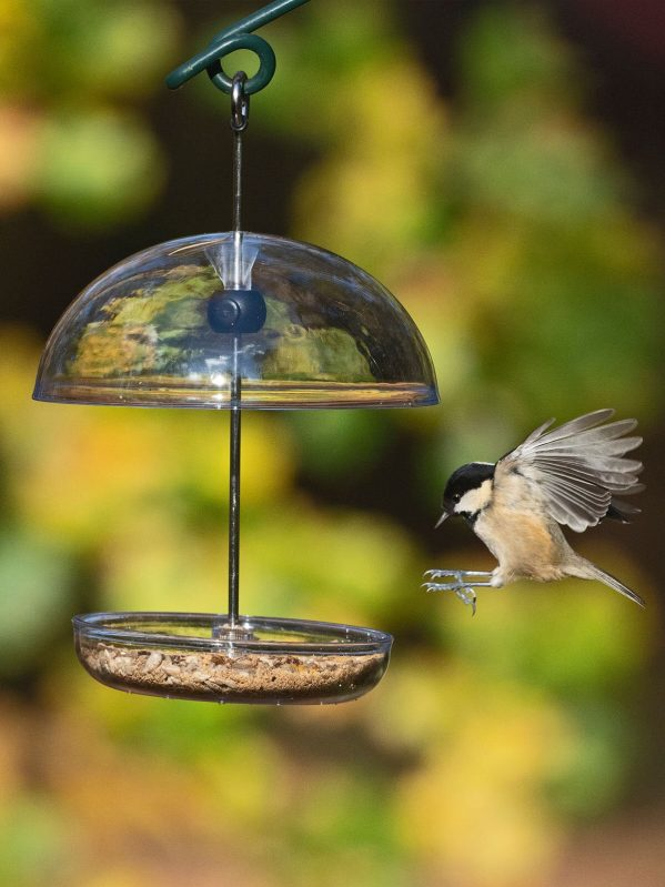 I Love Robins Pearl Feeder whanging with coal tit flying in