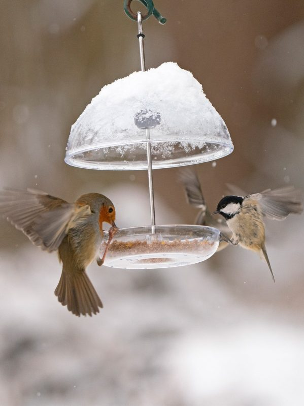 I Love Robins Pearl Feeder bird food protected from snow by dome. robin and tit feeding
