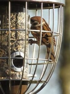 The NAtional Trust Nuttery acorn seed feeder squirrel proof feeder for wild birds with sparrows feeding