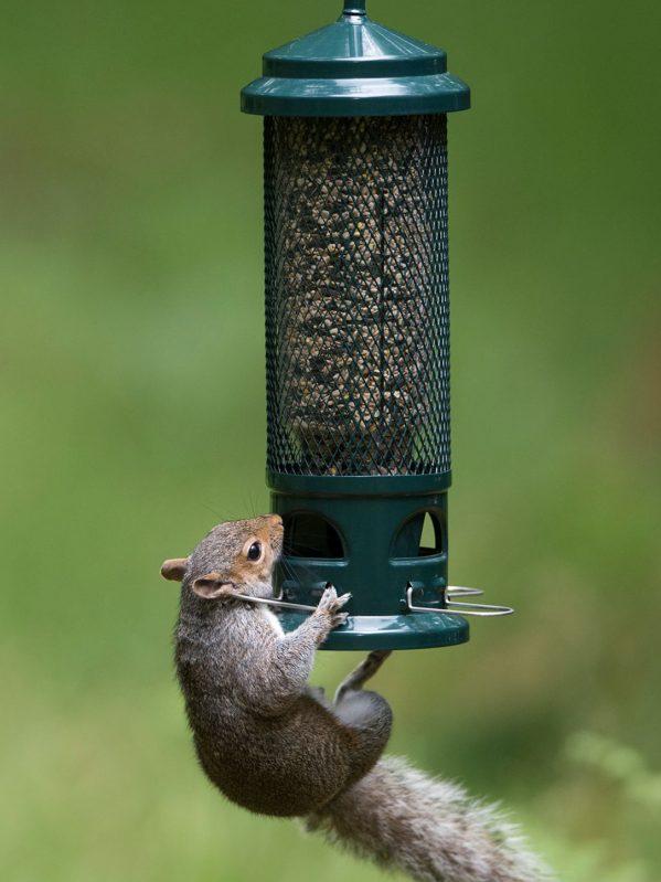 Squirrel buster. Squirrel proof wild bird feeder