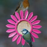 Flutter Butter Flowerbed feeder in pink with a robin and blue tit