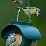 Wild birds feeding on Flutter Butter, salt free peanut butter